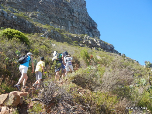 Guided Table Mountain Hiking