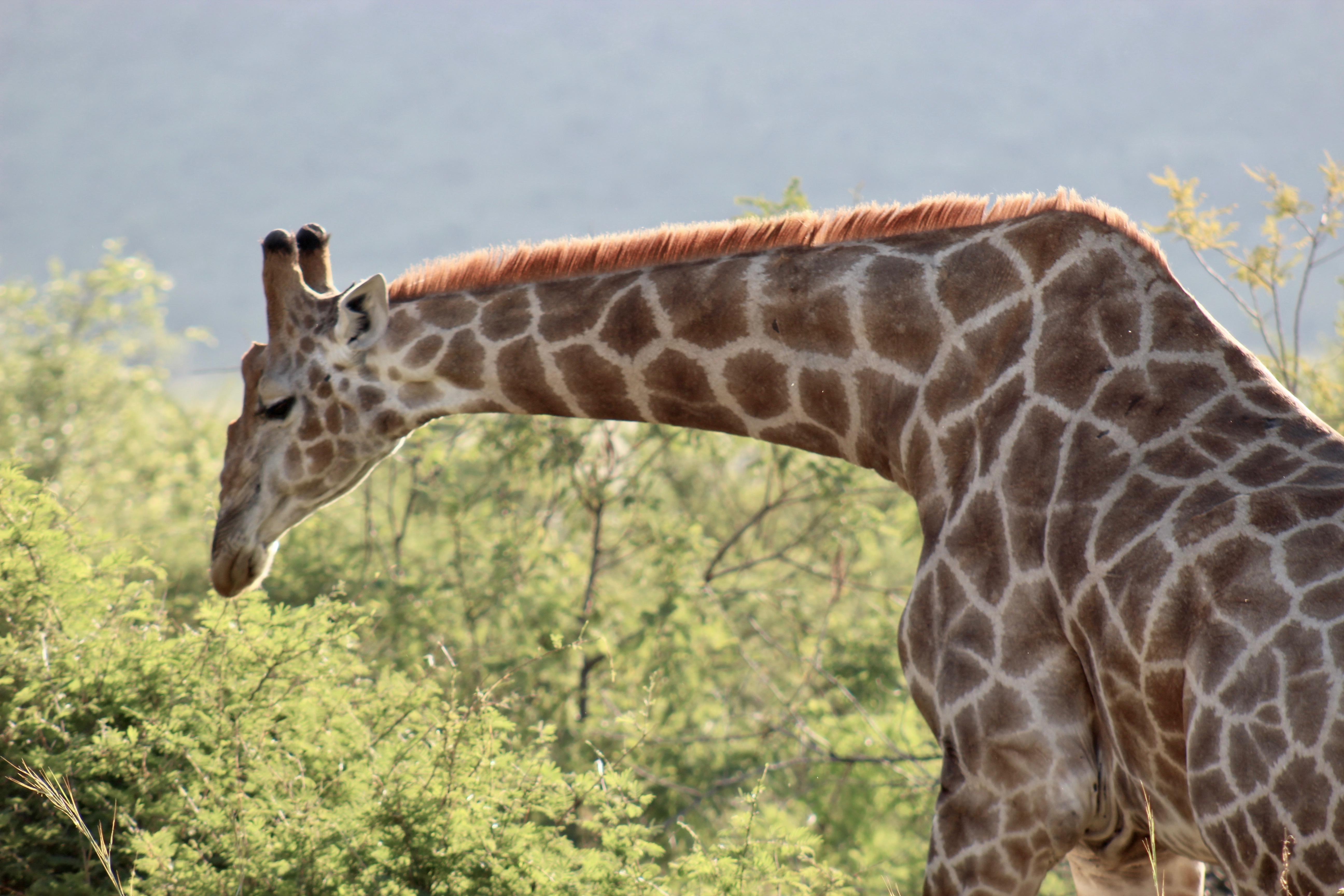 Pilanesberg Big 5 Safari