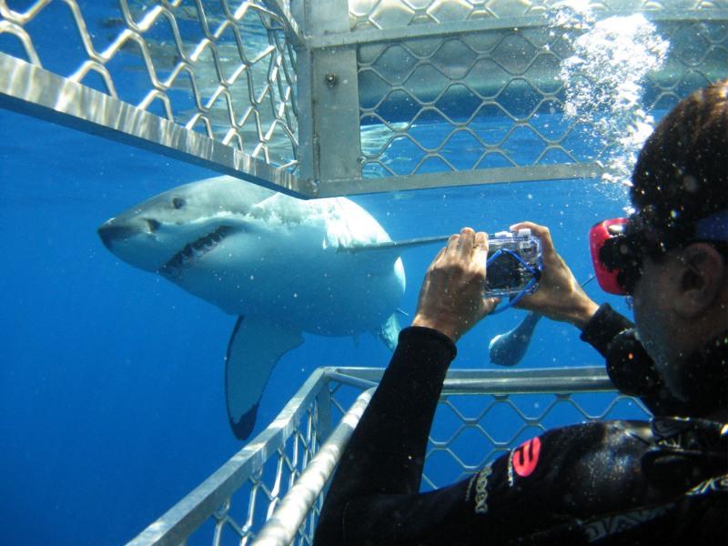 Shark Diving Tour