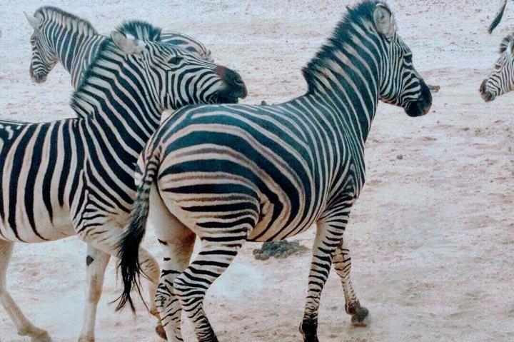 2 Days Kruger National Park Safari Adventure